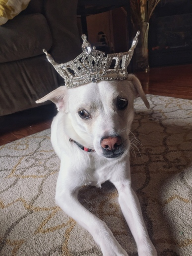 Maxcrown